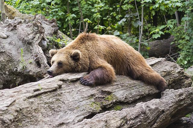 bear-1383980 640