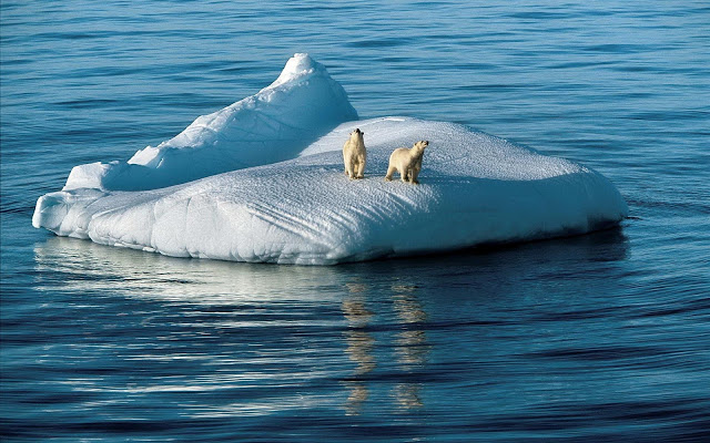 wallpaper-of-two-polar-bears-on-a-drifting-floe-hd-polar-bears-wallpapers